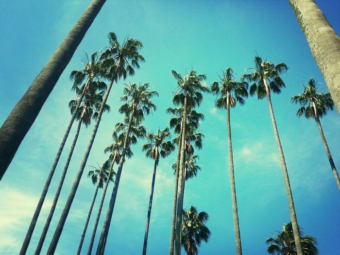 Summertime Relaxing C'est La Vie Hugging A Tree