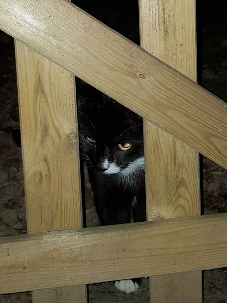 Animal Themes Close-up Domestic Animals Domestic Cat Mouse Catcher Night Time Wood - Material Wooden Gate