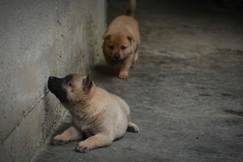 Animal Little Animals Little Animal Pets Pet Little Dog Lovely Pet Lovely Dog Little Dogs Little Pet Dog Black Eyes