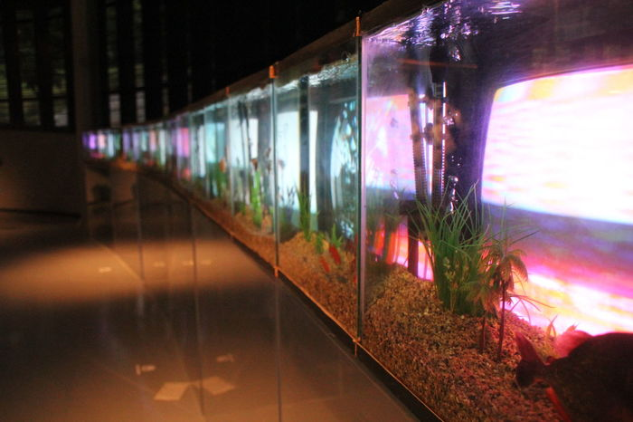 Art Art Center ArtWork Fish Bowl Glowing Illuminated Light Modern Art Multi Colored PaikNamJun Television Tv My Favorite Place