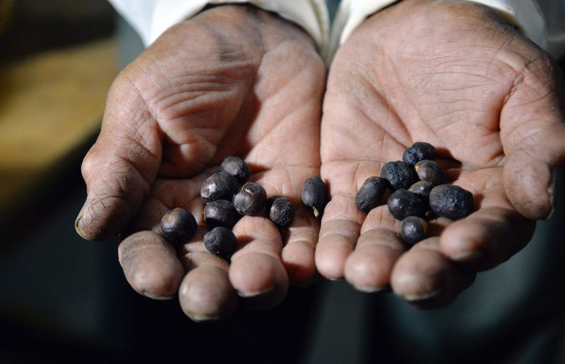 Close-up of man holding coffee beans