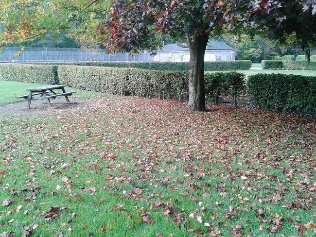 Autumn Hebdenbridge Valley NaturalBeauty Park Autumn Leaves EyeEm TreePorn Autumnbeauty Fallbeauty Enjoying The Sun