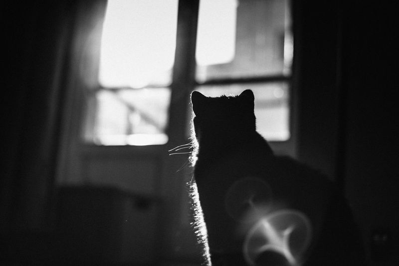 Close-Up Of Silhouette Cat Sitting At Home