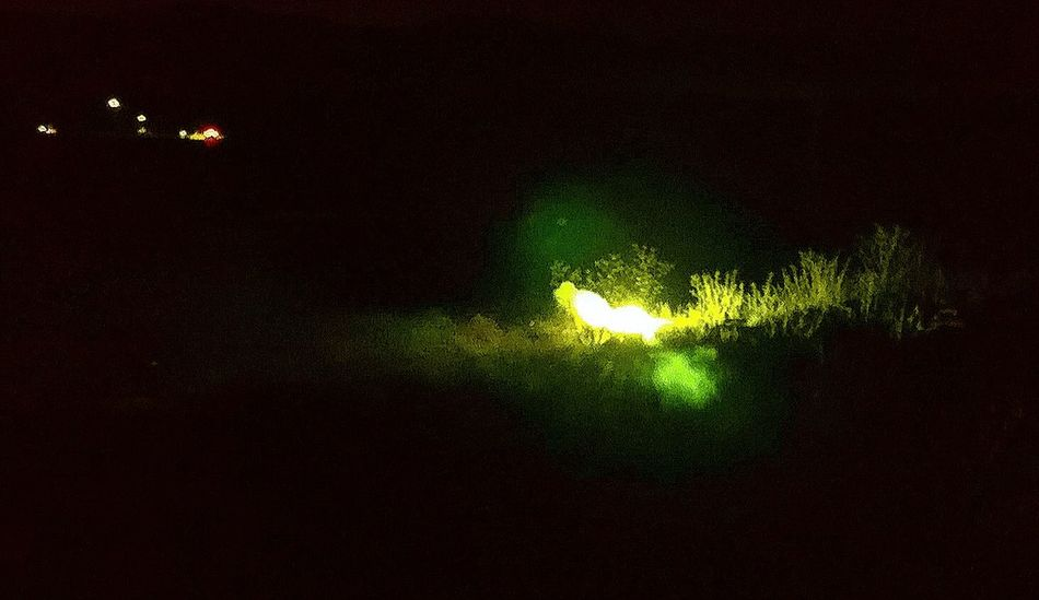 Green Color No People Nature Night Illuminated Close-up Indoors  Sky Drone  Fire XPERIA First Eyeem Photo Black Background Xperiaphotography XperiaZ5 Firecracker Firecrakers Field Nightphotography Night Lights Nightshot Nighttime Chrismas Time