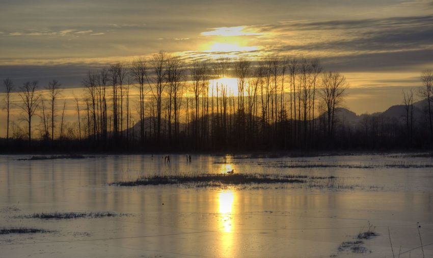 Animal Themes Bare Tree Beauty In Nature Cloud - Sky Day Idyllic Lake Nature No People Outdoors Pitt Addington Marsh, Frozen. Reflection Scenics Sky Sunset Tranquil Scene Tranquility Tree Water
