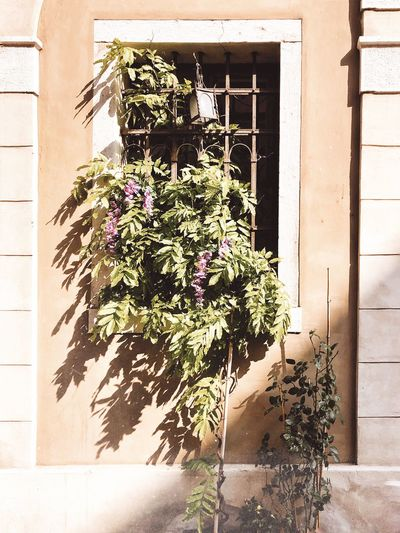 Flower plants growing outside building