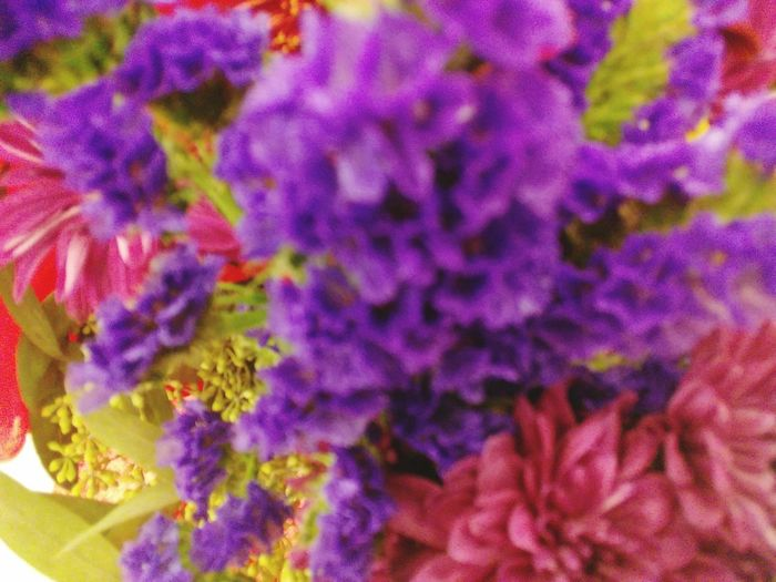 No People Close-up Purple Beauty In Nature Freshness Flower Head Plant Growth Lady Of The CHI LBTHE1