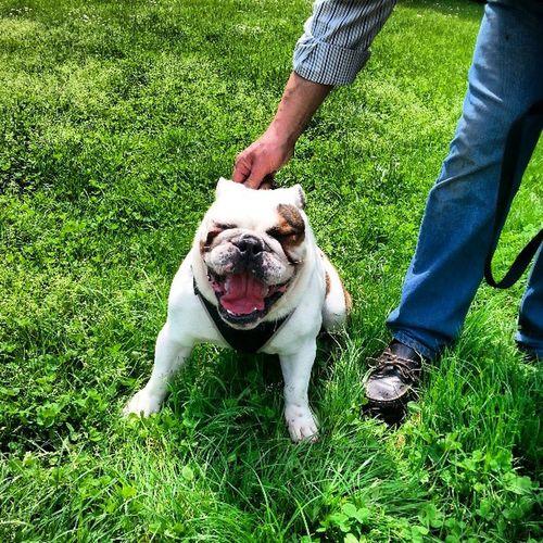Smiley Dog 😃🐶
