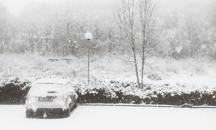 Nature Taking Over Snow Covered Blackandwhite ALL WHITE EVERYTHING Luxembourg My Daily Commute