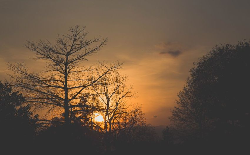 Silhouette trees against dramatic sky during sunset