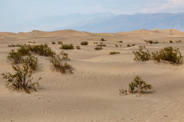 Scenic View Of Desert