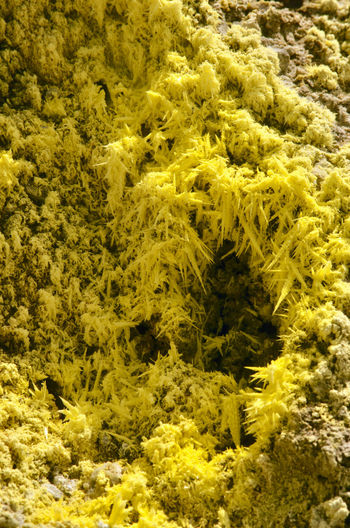 Sulfur crystals Hawai'i Volcanoes National Park Sulfur Gas Textures And Surfaces Volcanoes National Park Yellow Flower Abstract Beauty In Nature Chemical Elements Chemistry Close-up Crystals Crystals Art Full Frame Nature No People Outdoors Sulfur  Sulfur Crystal Sulphur Sulphur Crystals Volcano Yellow Yellow Color Yellow Flowers Yellow Stone