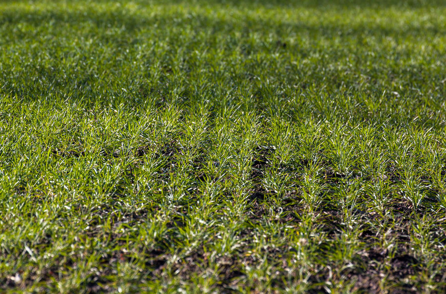 Acker Feld Field Frühling Frühlingserwachen Grass Grassy Green Growing Gräser Grün Grünes Gras Natur Nature Sonnenschein  Spring Springtime Sunshine Wachstum