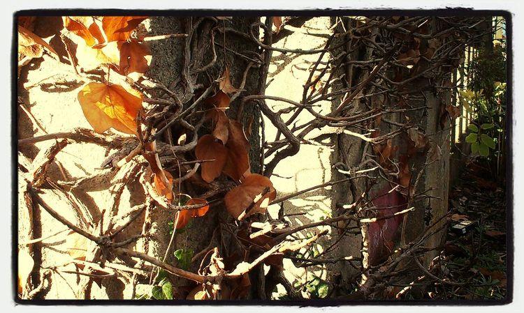 Herbststimmung Würmer für Mama B-)