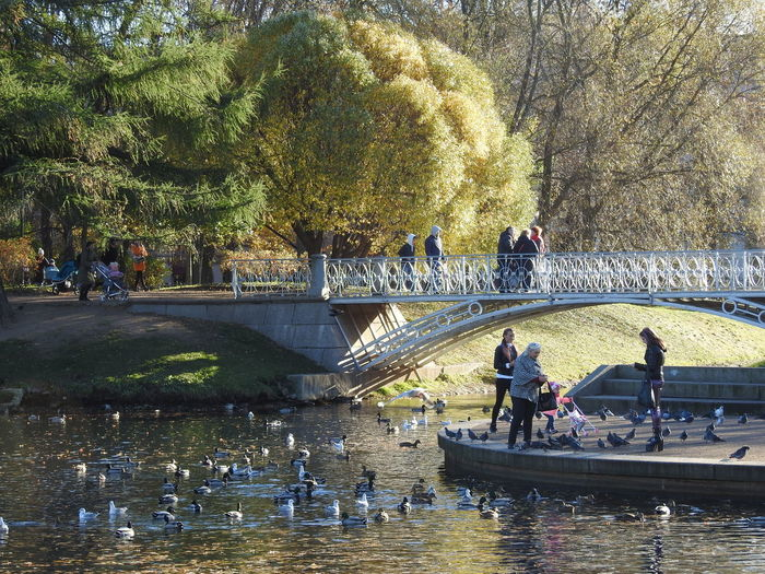 Autumn in the City Bridge - Man Made Structure Tavrichesky Garden Autumn In The City Colors Of Autumn Colors Of Sankt-Peterburg Sankt-Petersburg Sankt-peterburg Russia Big City Life Park - Man Made Space Bridge Lake View Birds🐦⛅ Trees Autumn🍁🍁🍁 Sunnyday☀️ Fifty Shades Of Yellow Autumn WoodLand Water Tree Waterfront Sky Water Park Autumn Mood