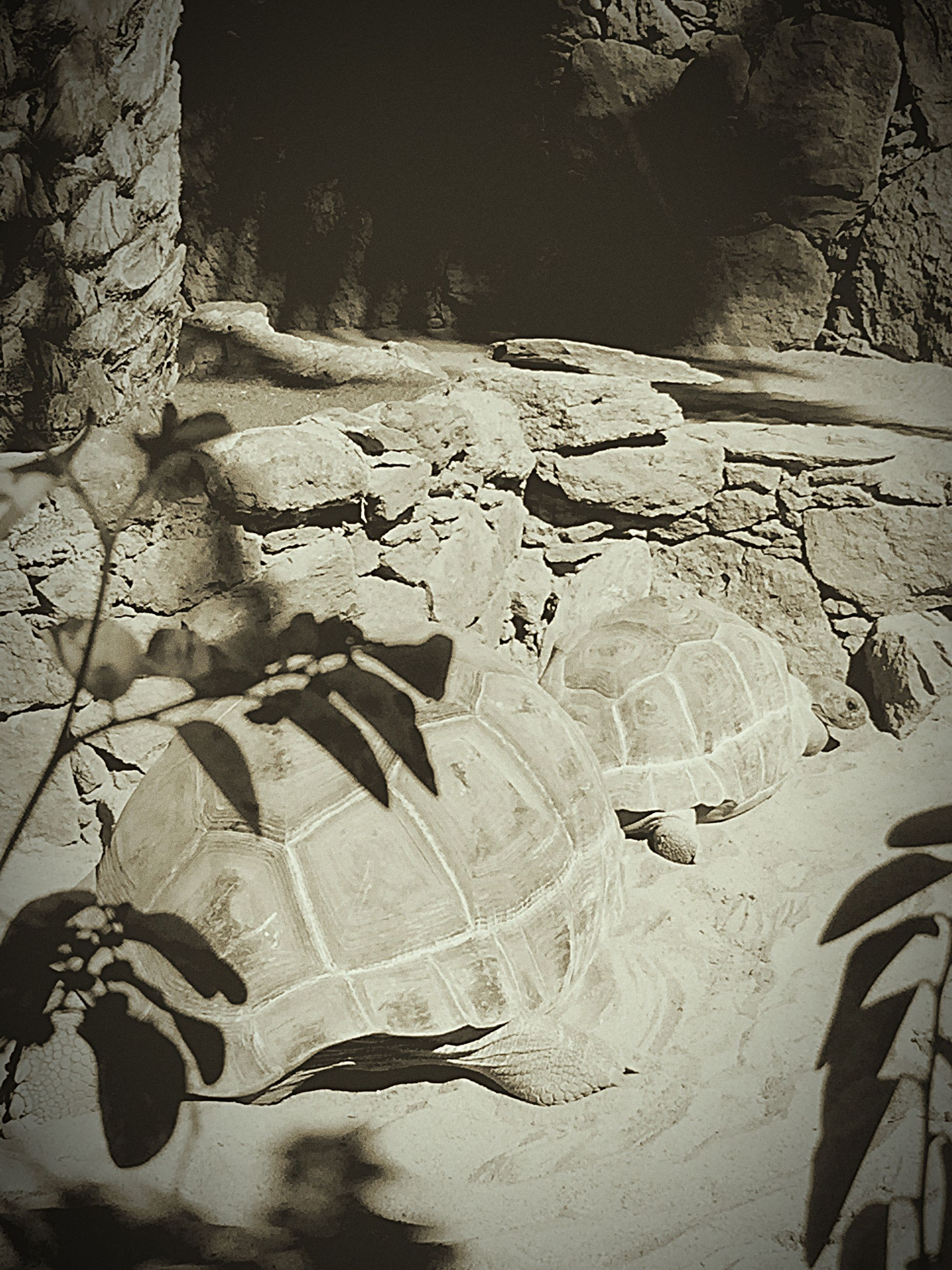 shadow, sunlight, wall - building feature, high angle view, built structure, day, abandoned, outdoors, architecture, old, wall, no people, nature, damaged, rock - object, stone material, textured, tree, obsolete