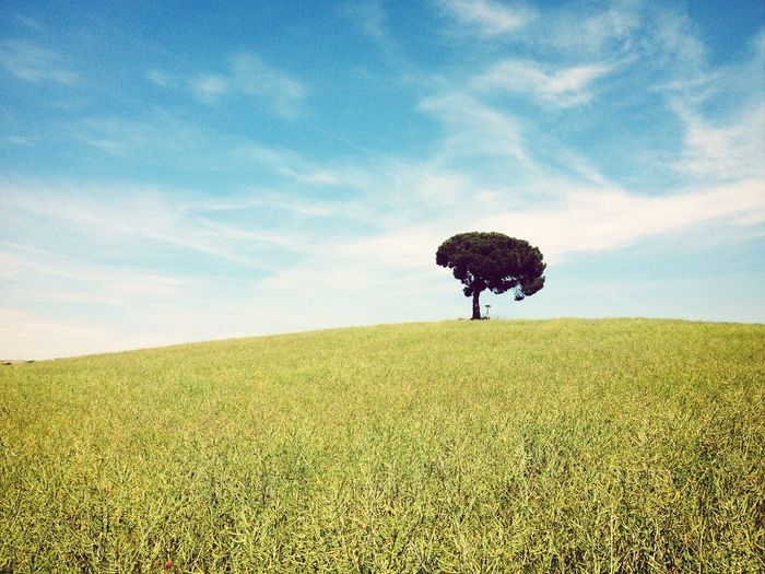 Lonely Tree Landscape_Collection The Color Of Love Photooftheday