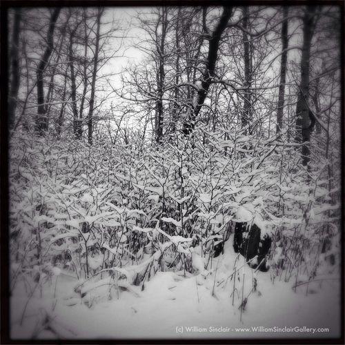"""April Showers in Saskatchewan"" IPhoneography Hipstamatic Loftus BlacKeys SuperGrain Film First Eyeem Photo"