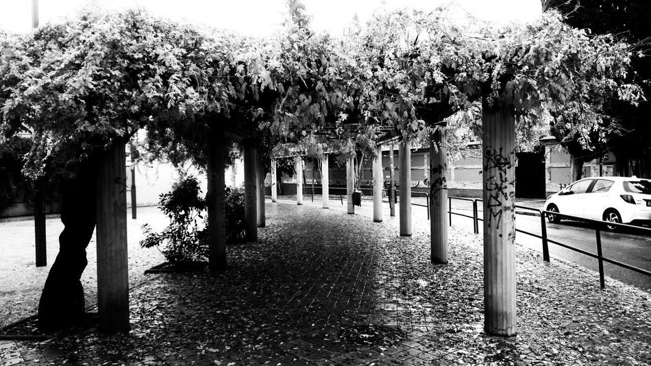 Plant Tree Nature Day Growth No People Direction Outdoors The Way Forward Architecture Park In A Row Footpath Built Structure Transportation Beauty In Nature Flower Flowering Plant Street Park - Man Made Space Treelined Blackandwhite Monochrome City