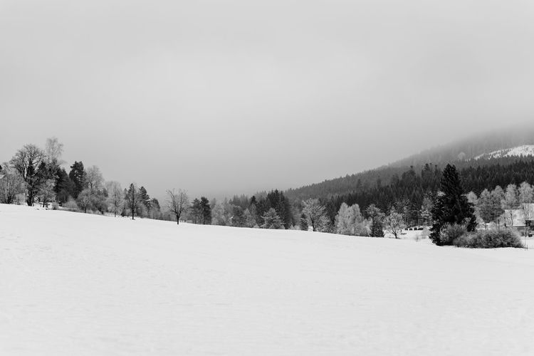 In shape Black & White Black And White Blackandwhite Cold Temperature Day Forest Landscape Mountain Nature No People Outdoors Pine Woodland Polar Climate Reupload Scenics Sky Snow Snowing Tree Trees Winter Perspectives On Nature Shades Of Winter