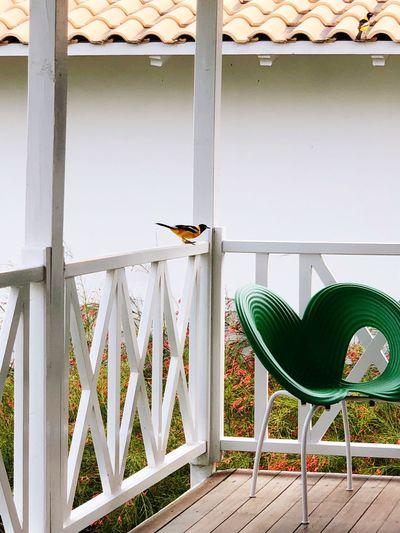 Bird Chair Seat