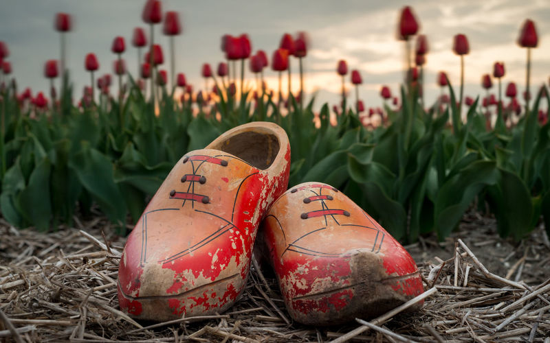 Close-up of red shoes on field