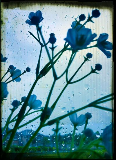 outside my window Raining Day Dublin, Ireland