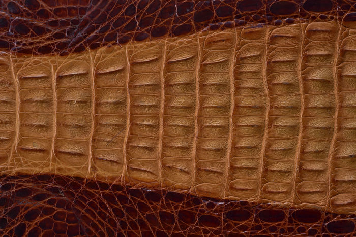 Advanced Backgrounds Brown Close-up Crocodile Crocodile Skin Day Full Frame Graphics Indoors  Leather Lines Material Material Design MaterialDesign Materials No People Pattern Protruding Shading  Skin Taiwan Textured