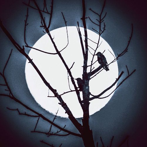 The Innovator Playing With Edits Double Exposure Patterns In Nature Silhouette Birds_collection Fullmoon Nature From My Point Of View
