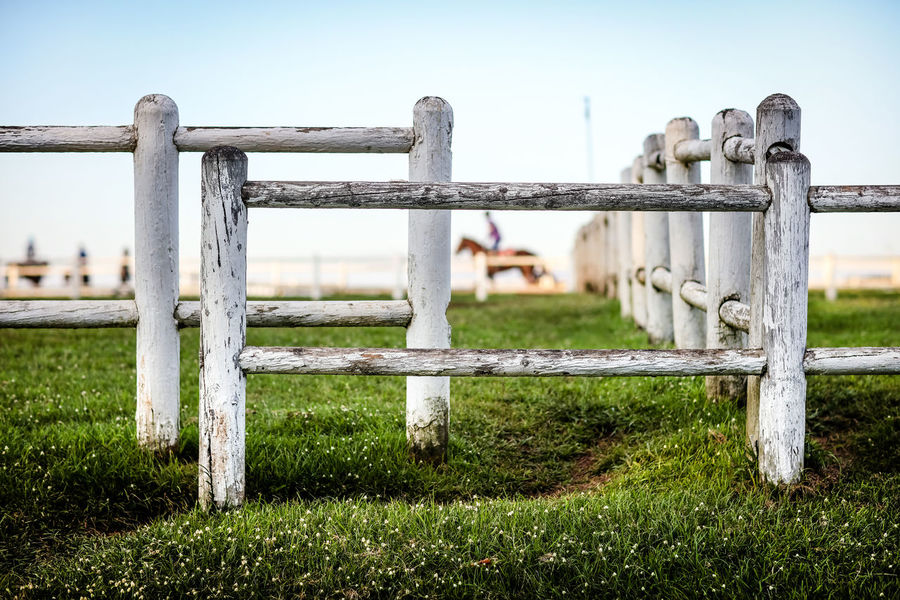 Horses in the paddock Horses Rural Countryside Day Field Gate Grass Horse No People Outdoors Paddock Padock Railing Safety