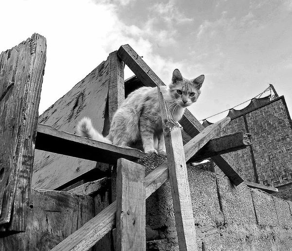 Low Angle View Outdoors Sky No People Day Nature Climbing Cat Blackandwhite Photography Iquique