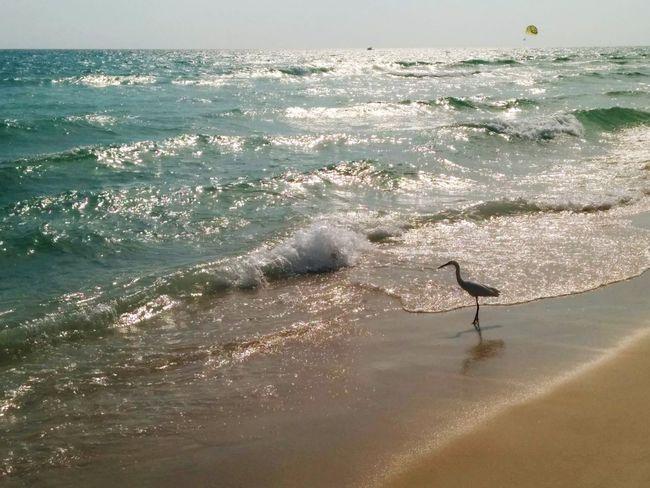 Seagull Sunshine Sea Enjoying The Sun Fresh Air Panama City Beach