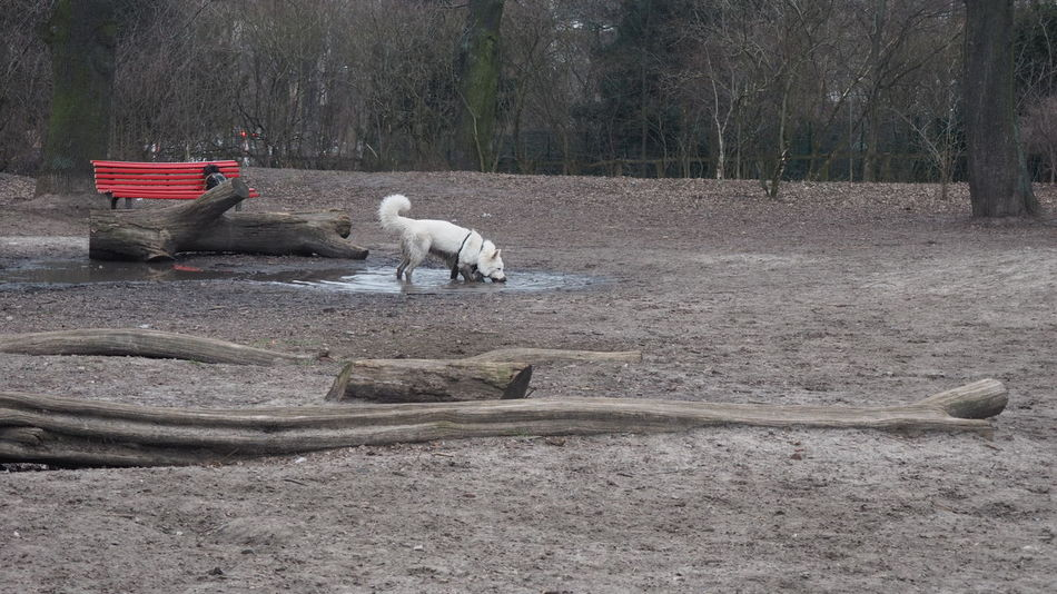 Animal Themes Beauty In Nature Day Dog Have A Drink Nature No People One Animal Outdoors