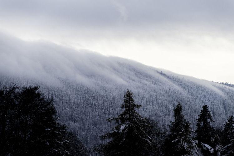 Nuages sur la vallé Beauty In Nature Cloud Cold Temperature Forest Landscape Mountain Nature No People Outdoors Snow Tree Winter