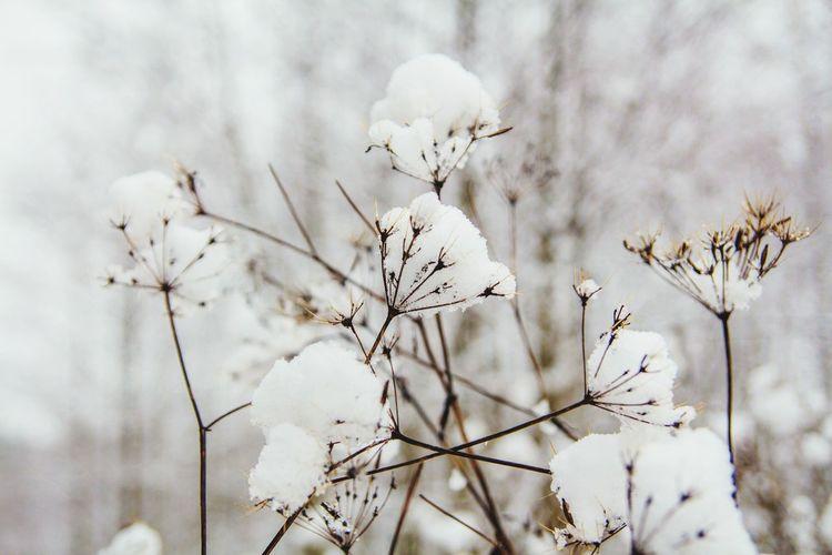 Showcase: December Snow Photo<3