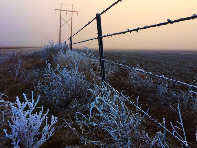 http://youtu.be/ZvS6Xvz1rAg Texas Panhandle Naturelovers EyeEm Tadaa Community EyeEm Nature Lover Eye4photography  Frosty Mornings South For The Winter In Living Color Weather EyeEm Music Lover Mood And Music Darkness And Light Frost And Fog Showcase: January