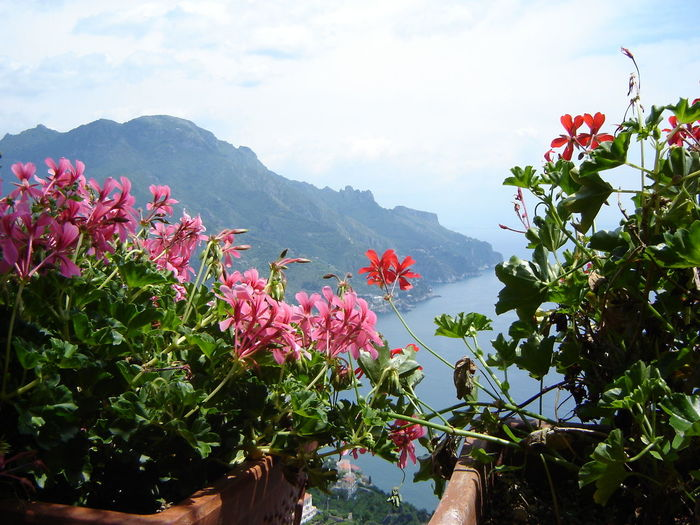 Beauty In Nature Blooming Flower Fragility Freshness Growth Nature Petal Plant Sky