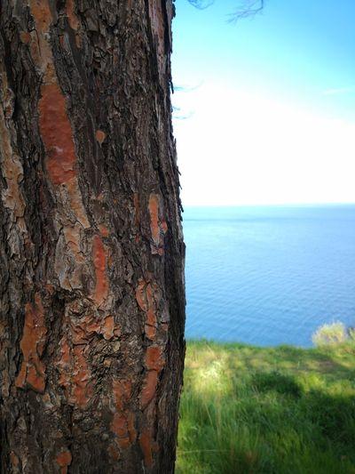 Sea Plant Tree