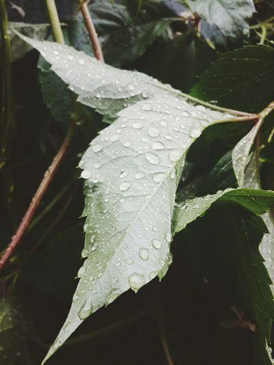Drops Water Rain Dnepropetrovsk Plant