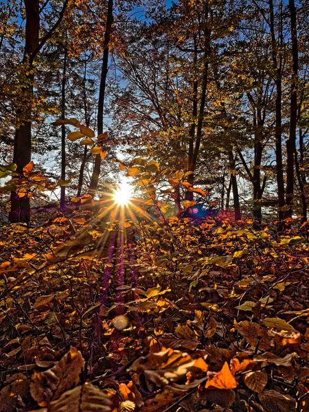 Autumn Autumn Colors Autumn Leaves Gegenlicht Goldener Oktober Herbst Herbstblätter Sonnenstern Sonnenstrahlen
