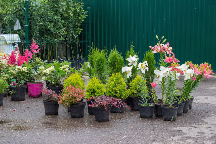 Potted plants at flower pot