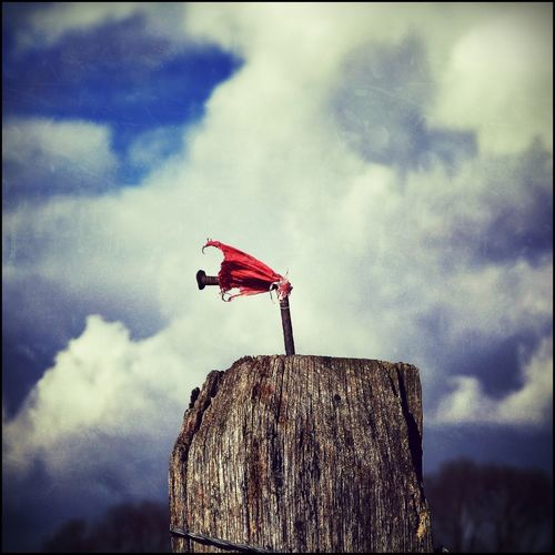 Close-up of red perching on flag against sky
