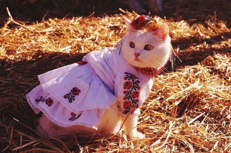 Cat of Ukraine Ukraine Belka Kiev