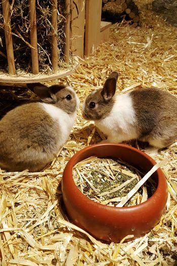 Rabbit Bunny 🐰 Bunny  Pets Animals Straw Cute Pets Baby Animals Baby Rabbits