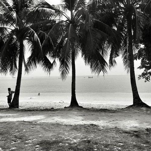 Blacknwhite Nostalgia Coconuts Alcoy