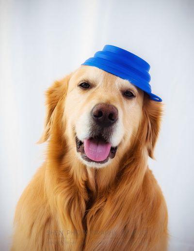 Close-Up Portrait Of Dog Wearing Bowl