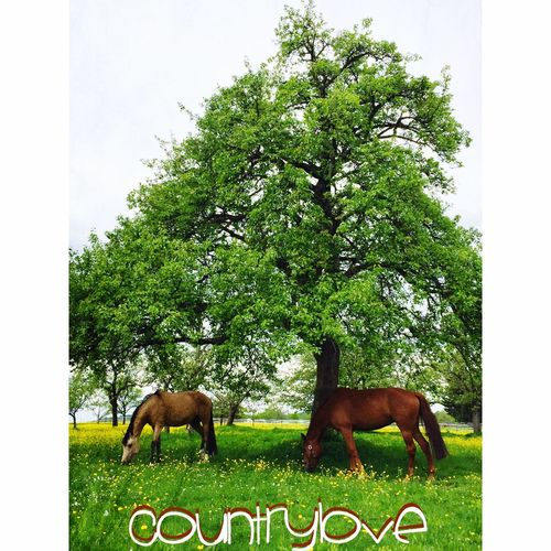 Countrylove❤️ Enjoying Life Riding Horse Horse Riding Country Country CountryLivinG Countryside Country Schoenaich