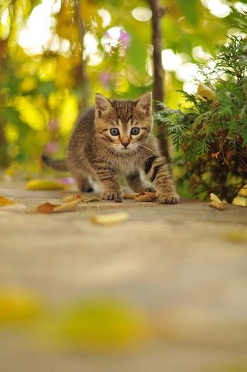 Portrait of tabby kitten