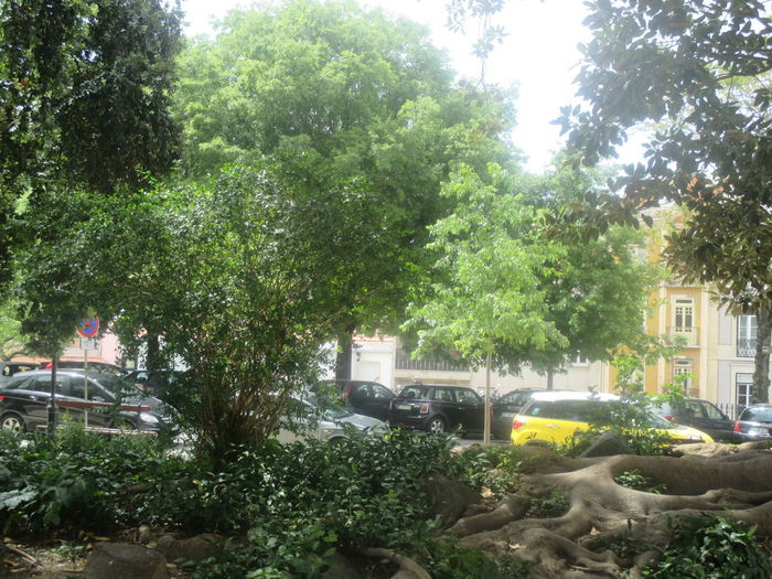 #city View #daylight #green Color #narure And Cars #parked Cars #transportation #urban Scene Architecture Car City Day Green Trees Growth Land Vehicle Mode Of Transport Nature No People Outdoors Park Transportation Tree Urban Landscape Urban Nature Yellow Building Yellow Car