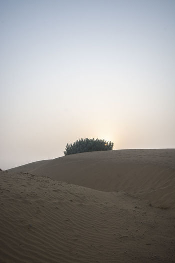 Sky Tranquility Tranquil Scene Land Scenics - Nature Sand Beauty In Nature Landscape Environment Clear Sky Desert Copy Space Nature Non-urban Scene Horizon No People Remote Arid Climate Plant Climate Outdoors Thar Desert India Rajasthan
